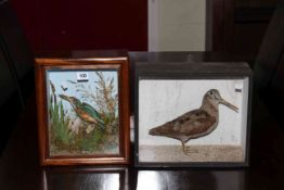 Two cased taxidermy specimens, Kingfisher and Snipe, one with wall bracket.