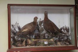 Cased taxidermy of a male and female red grouse.