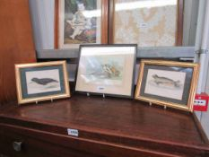 Three 19th Century prints of seals