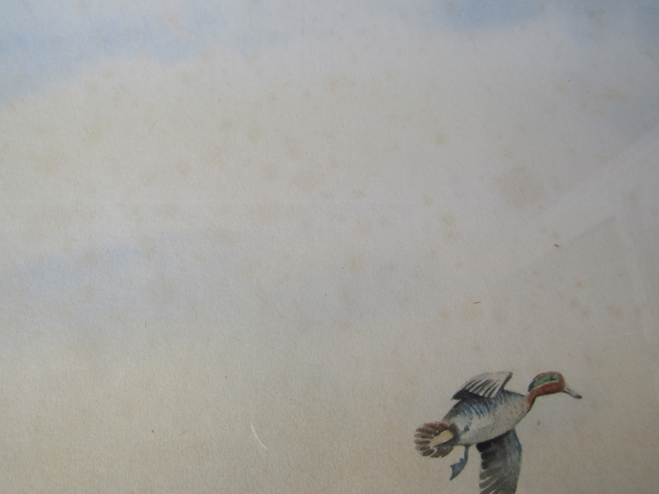 SIMON TRINDER (b.1958) A gilt framed watercolour, Teal coming in to land on water. - Image 4 of 5