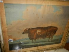 A framed and glazed print entitled 'The Unrivalled Lincolnshire Heifer' printed by Thomas Waver.