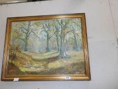 A gilt framed oil on board woodland scene.