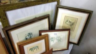 6 framed and glazed art deco dog prints by Lucy Dawson and Cecil Aldin.
