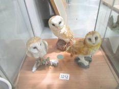 3 barn owls.