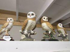 4 Leonardo barn owls.