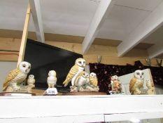 5 Leonardo barn owls.