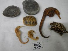 A mixed lot including antique dried taxidermy sea horses, tortoise shell and old fossil.