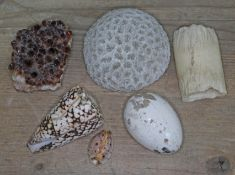 A mixed lot comprising a citrine geode, urchin/coral, shells, a pottery egg and a piece of bone.