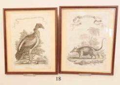 2 alte Kupferstiche