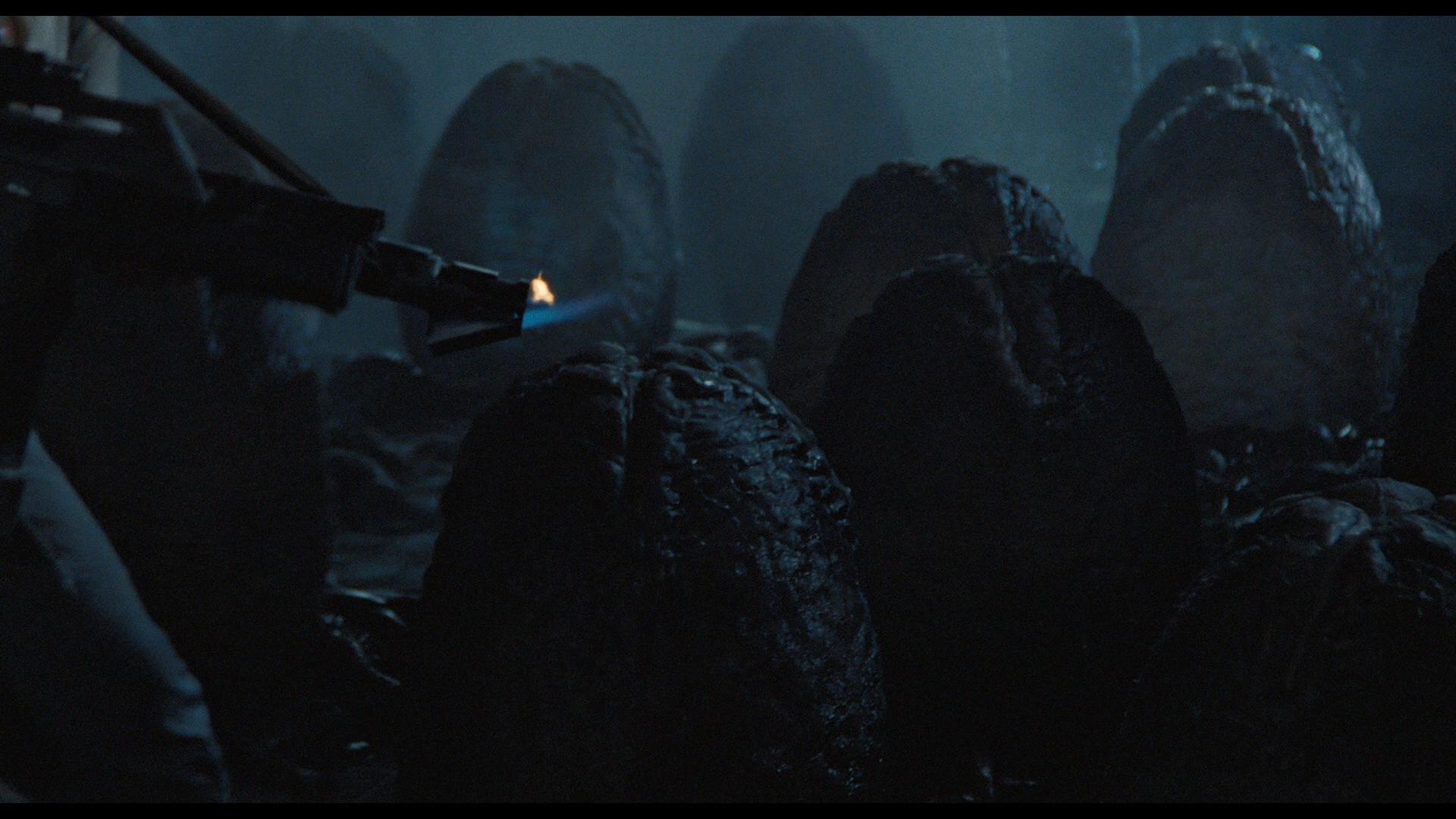 ALIENS (1986) - Xenomorph Egg - Image 14 of 14