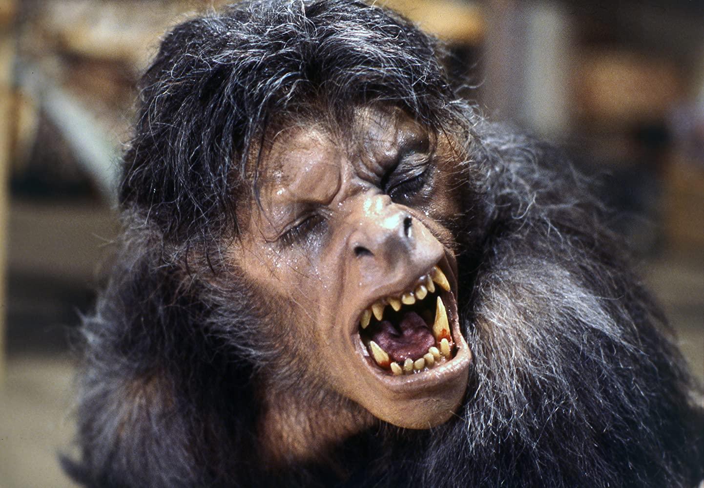 "AN AMERICAN WEREWOLF IN LONDON (1981) - Rick Baker SFX ""Change-O"" Mechanical Werewolf Transformation - Image 25 of 27"