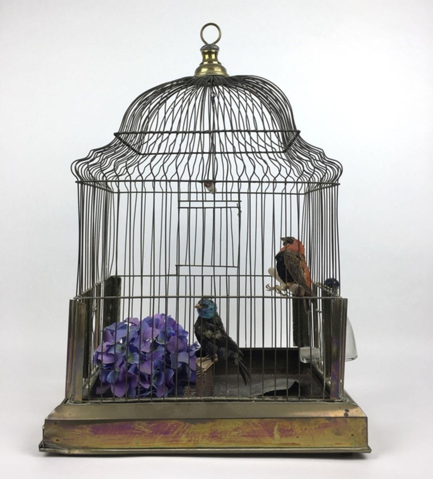 (Antiek) VogelkooiMessing vogelkooi met twee opgezette vogels, eerste helft 20e eeuw. Conditie: