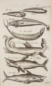 Jonston, Jan: Historiae naturalis de piscibus et cetis libri V. / Historiae naturalis de exsanguibus