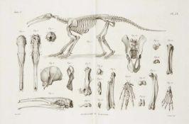 Cuvier, George Baron de: Recherches sur les ossemens fossiles, où l'on rétablit les caractères de