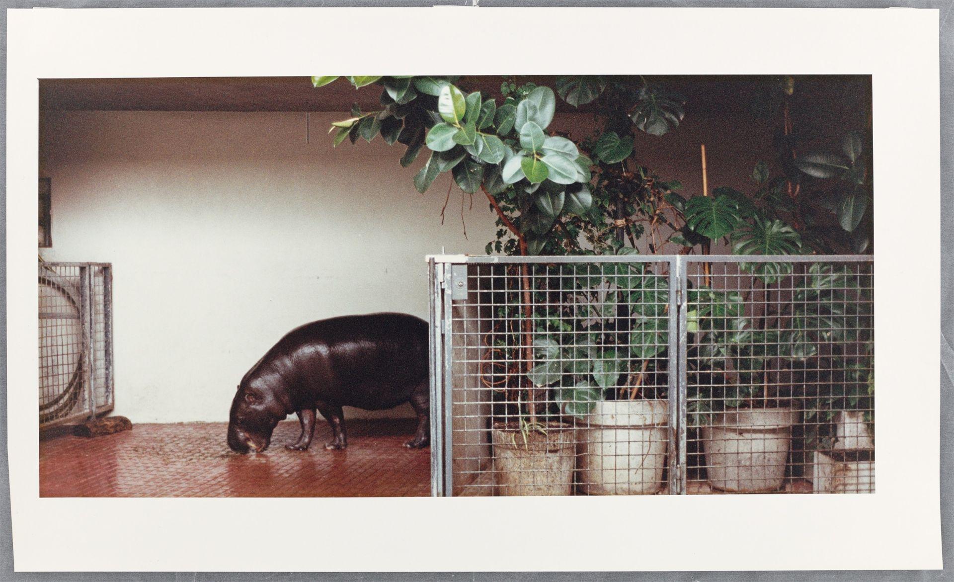 Candida Höfer (Eberswalde 1944 – lebt in Köln) - Bild 2 aus 3