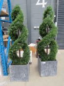 Two spiral artificial potted conifers