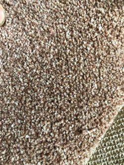 Cornwall action grouse deep twist pile 7.4m x 5m polypropylene twist pile hessian back carpet