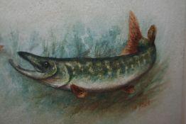 "Signed Harry Davis Watercolour ""Pike"""