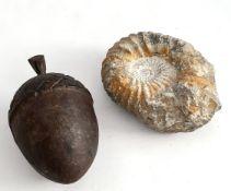 Antique Ammonite Fossil & Cast Iron Acorn