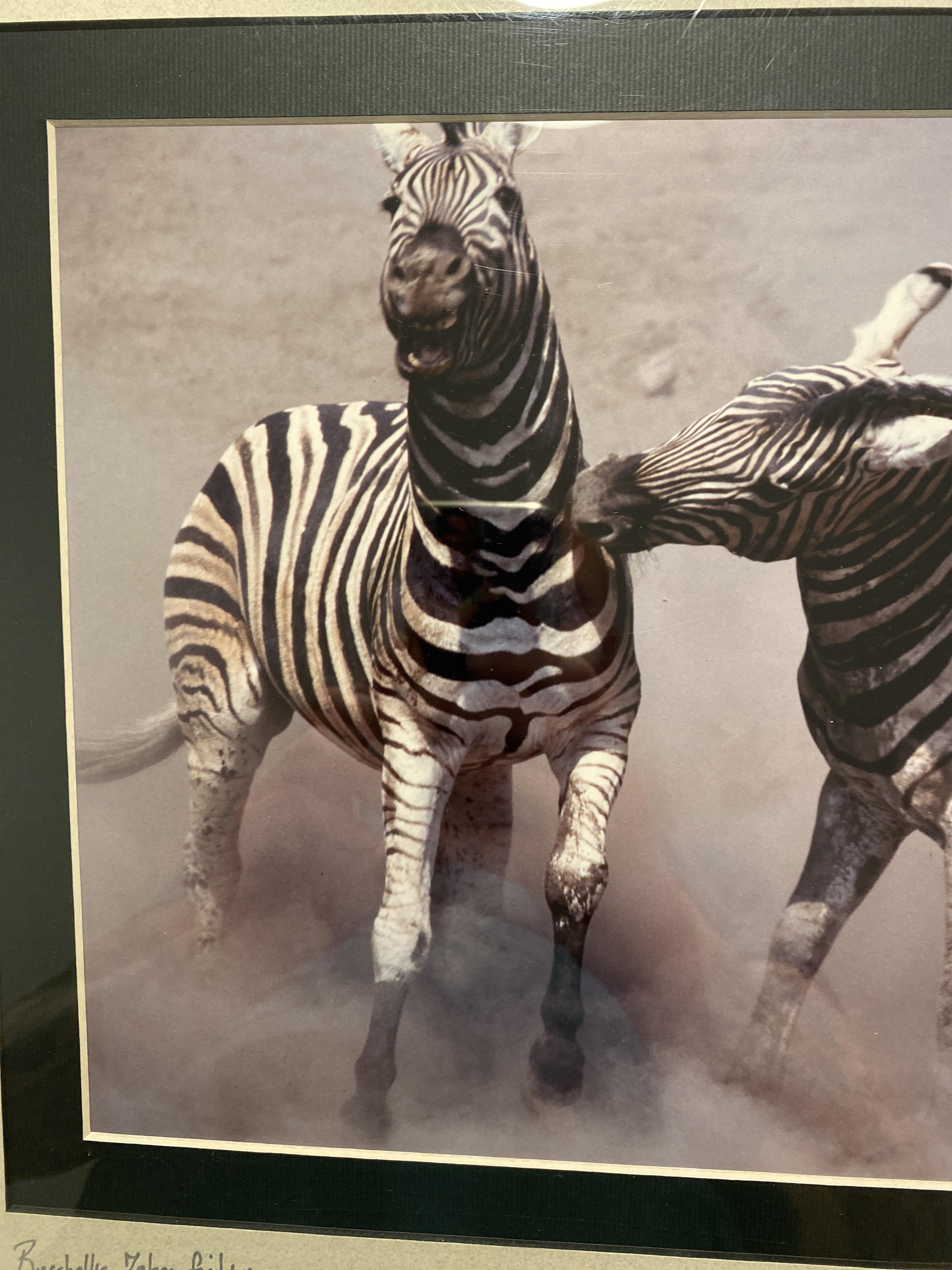 Burchell's Zebra Fighting, Etosha, Namibia, Limited Edition By Dr Hentie Burger - Image 2 of 6