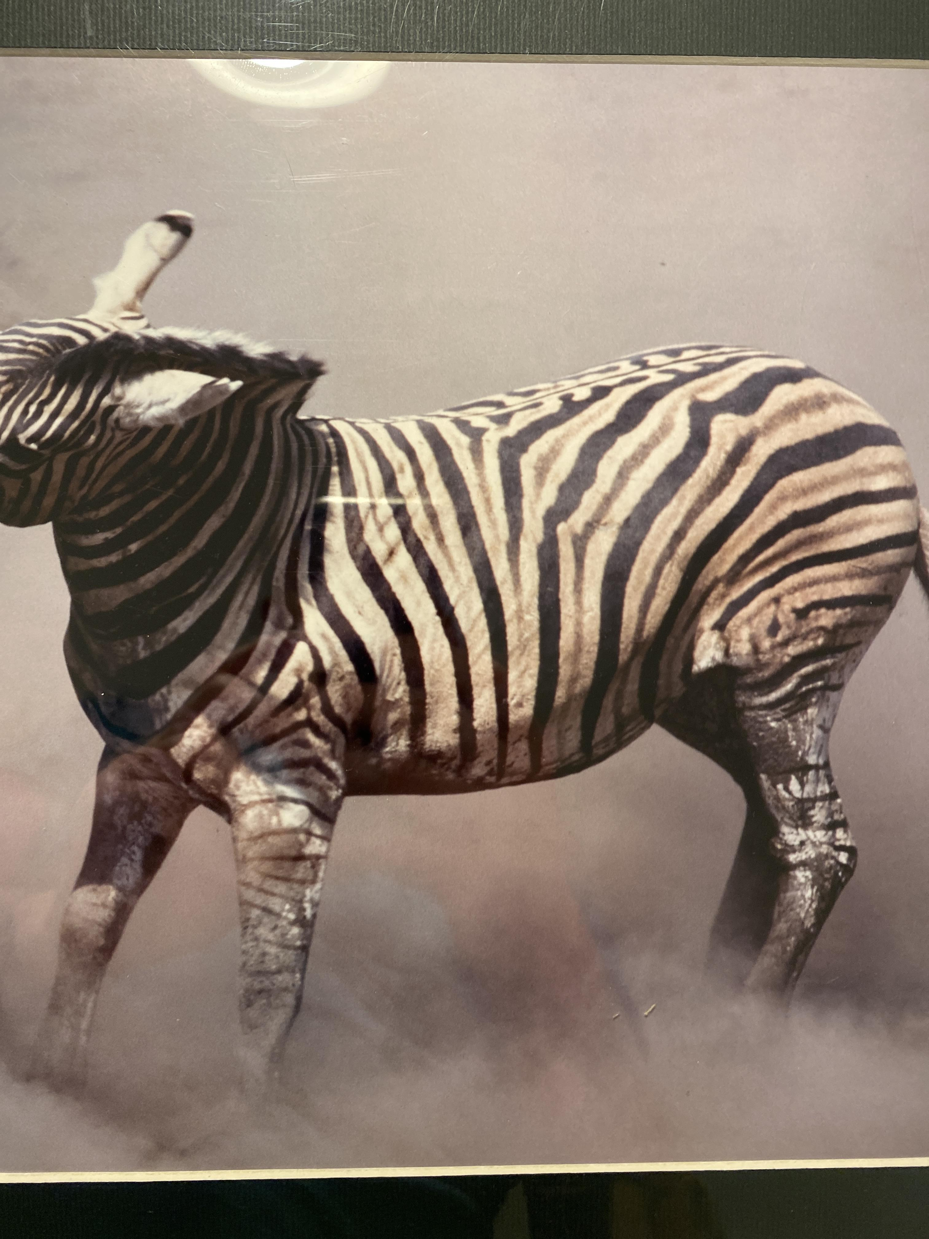 Burchell's Zebra Fighting, Etosha, Namibia, Limited Edition By Dr Hentie Burger - Image 3 of 6