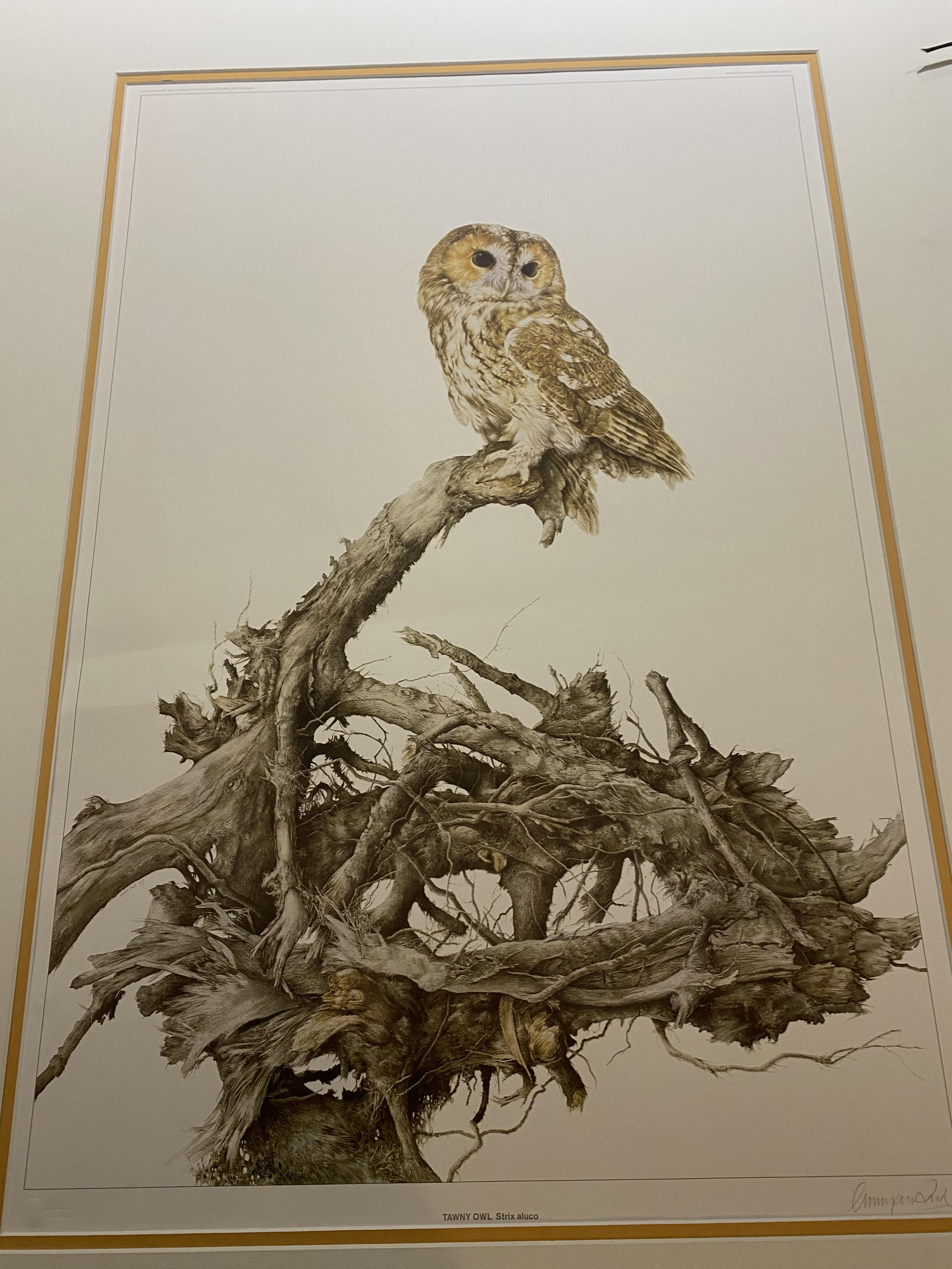 G Bryan Reed Large Rare Limited Edition print 'Tawny Owl Strix Aluco'