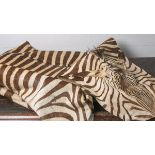 Zebrafell, Böhm-Zebra / Equus quagga boehmi (1950/60er Jahre, Namibia), IUCN-Bewertung: