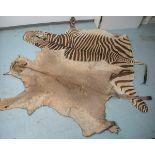 Löwenfell, Panthera leo (1950/60er Jahre, Namibia), Vorleger, sandfarben, gelblich, dunkel