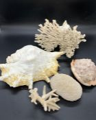 A selection of shells and coral