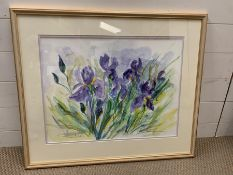 Framed watercolor of Iris signed lower right