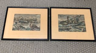 A Pair of Etchings T. Galle, 17th century. One shows Anas Marina, Anas and Hirundo and the other