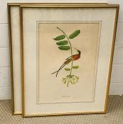 """A pair of lithographies depicting birds, """"Colibri topaze"""" and """"Tangara septicolore"""" (Paradise"""