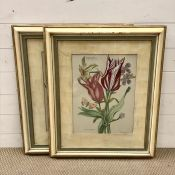 """A pair of hand coloured prints depicting botanical illustrations such as """"Iris coerulea"""" and """""""