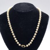 A Uniform row of sixty-one 6.5-7 mm cultured Akoya pearls strung knotted to a 9 carat yellow gold