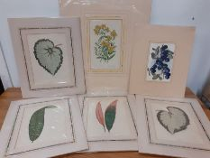 A set of six antique botany prints, four of them after 'Beautiful Leaved Plants' by E.J. Lowe and W.
