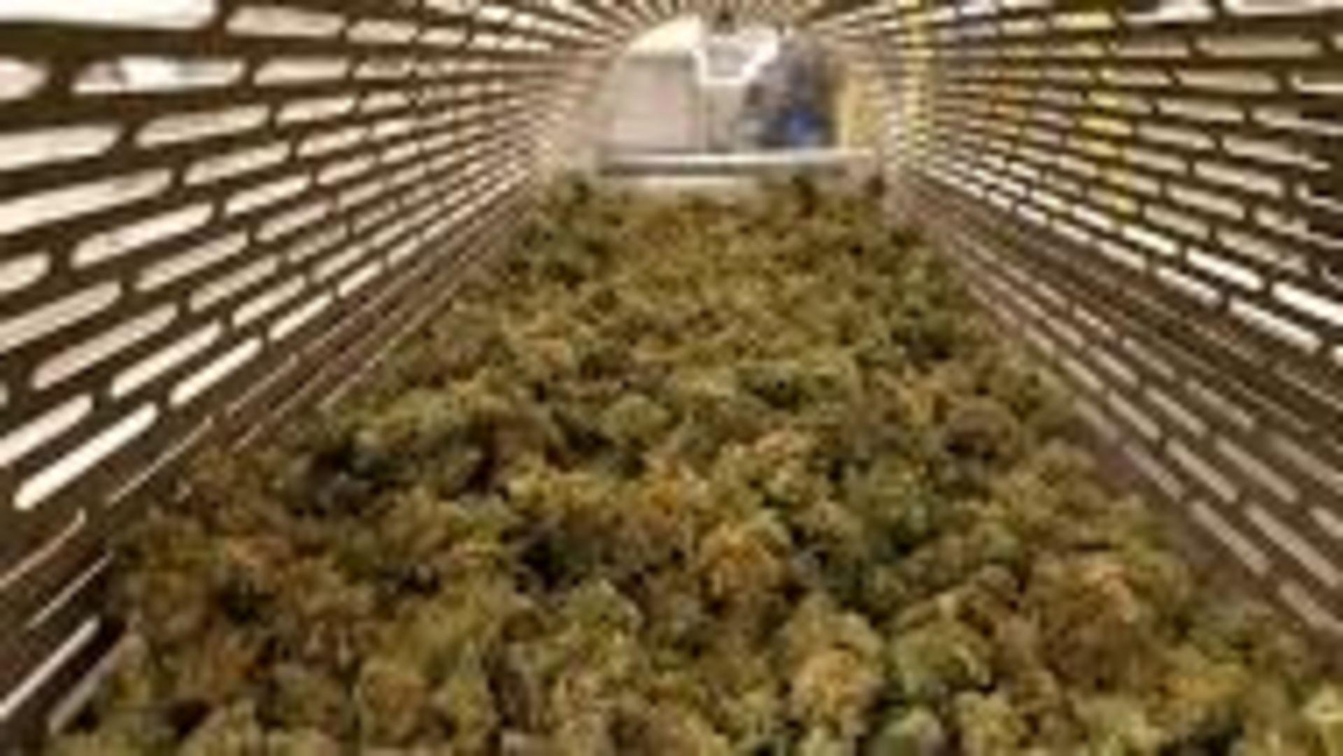 Unused/FactoryNew Revolution Cannabis & Hemp Flower Finisher System Model RDF 4300.100-200 lbs/8 hrs - Image 27 of 32