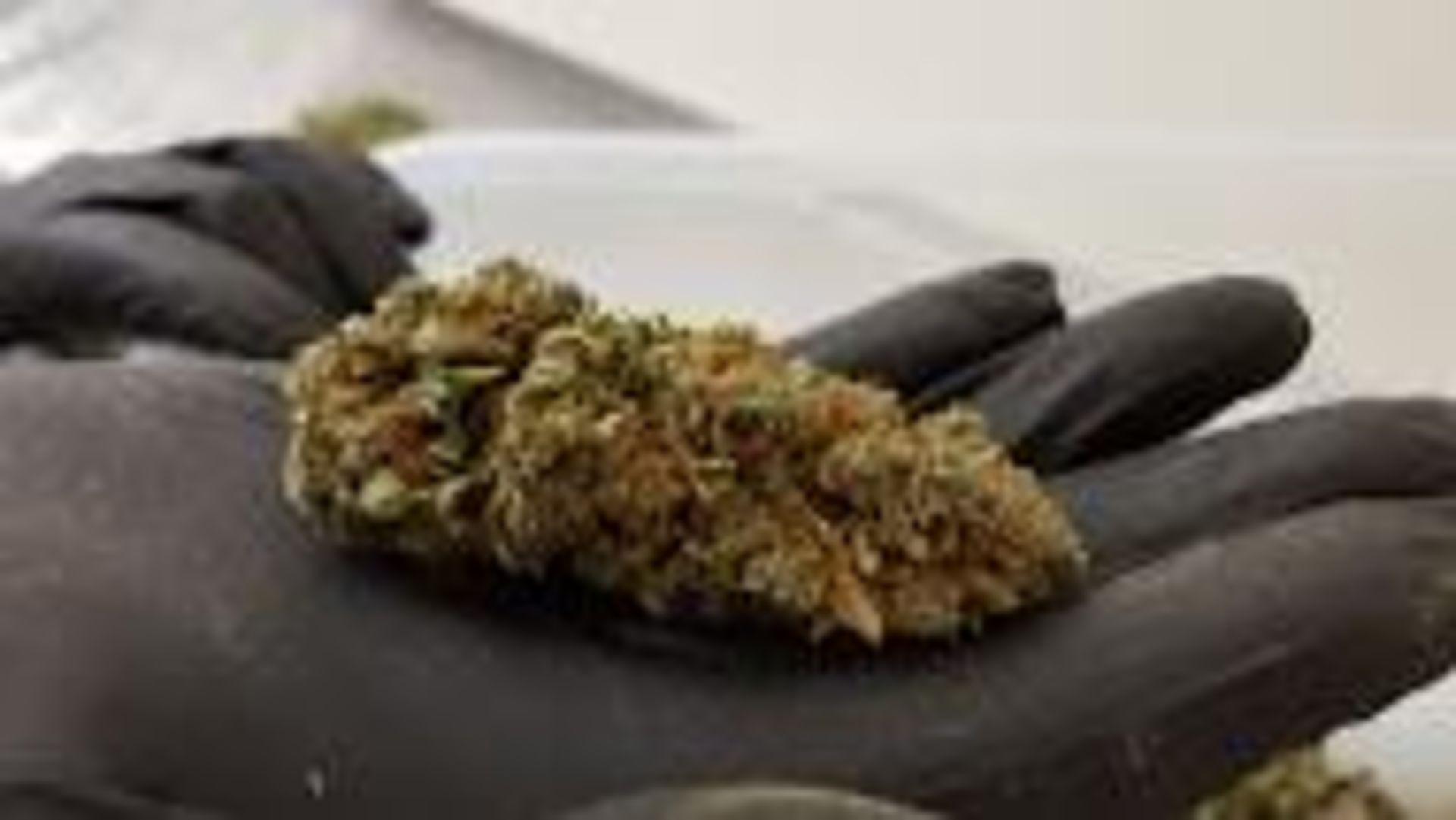 Unused/FactoryNew Revolution Cannabis & Hemp Flower Finisher System Model RDF 4300.100-200 lbs/8 hrs - Image 24 of 32
