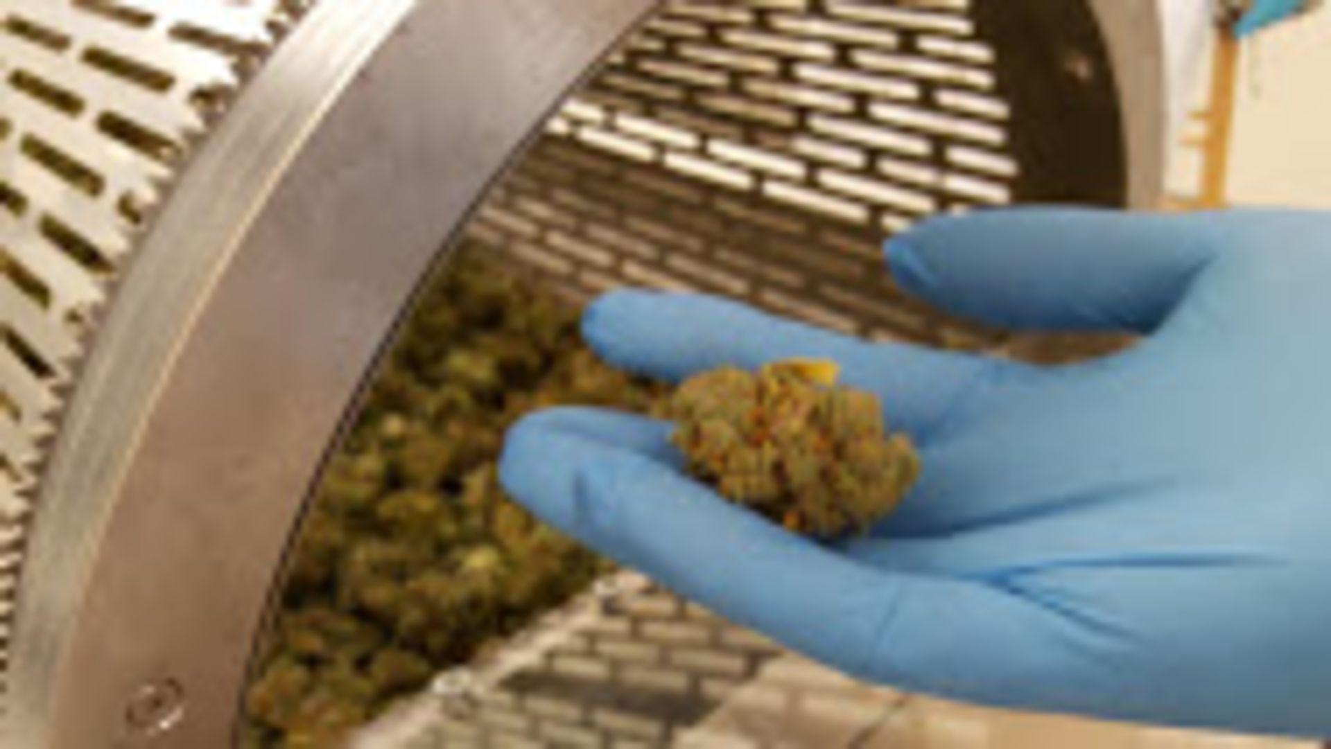 Unused/FactoryNew Revolution Cannabis & Hemp Flower Finisher System Model RDF 4300. Make $1,500/day - Image 28 of 32