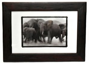 MARTYN COLBECK; photo lithograph, elephants, 1/50, signed, 35 x 52cm, framed with artist's