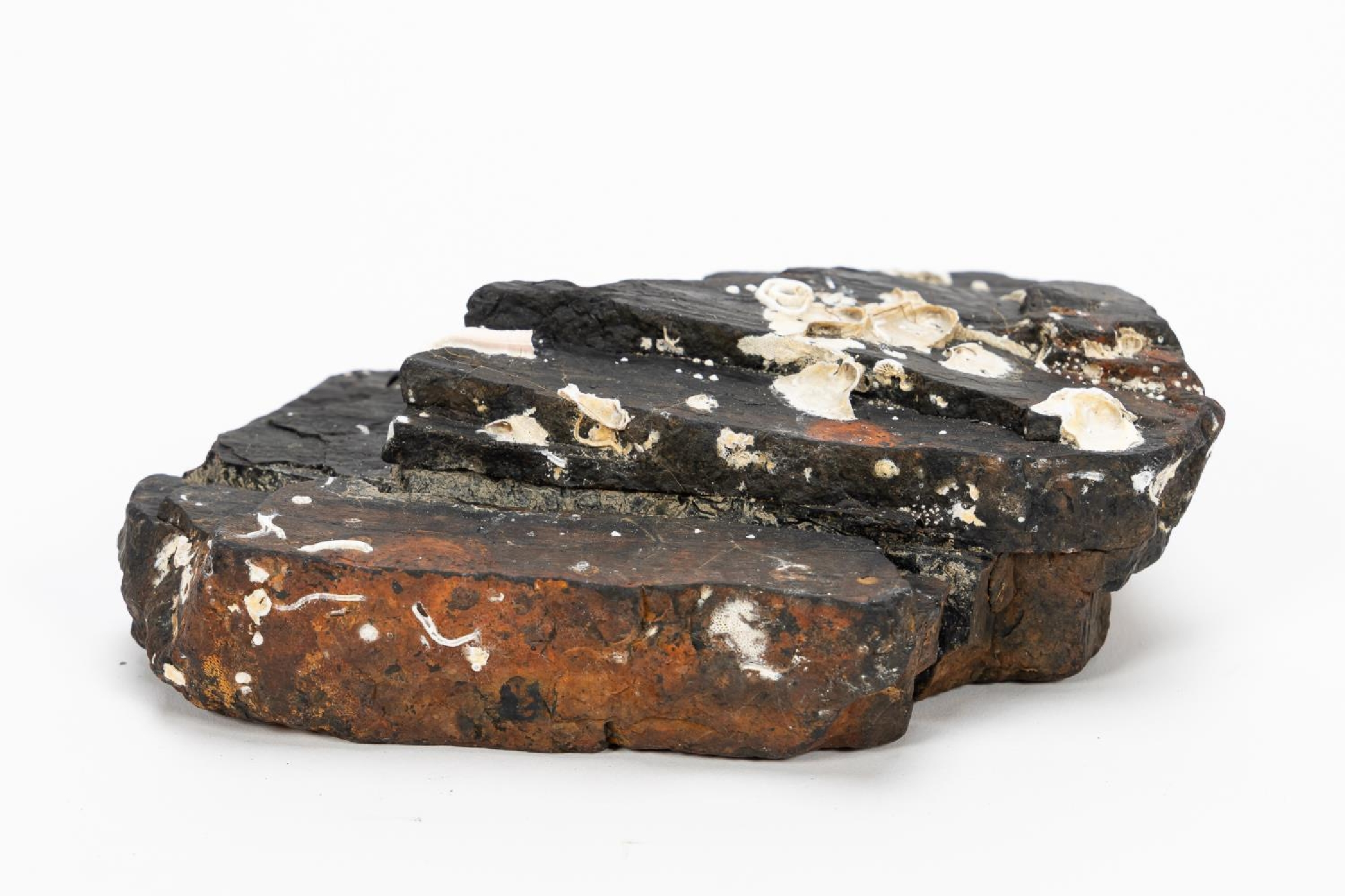 RMS CARPATHIA, SALVAGED COAL IN TWO PIECES - Image 4 of 7