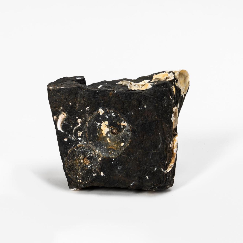 RMS CARPATHIA, SALVAGED SINGLE PIECE OF COAL - Image 4 of 4