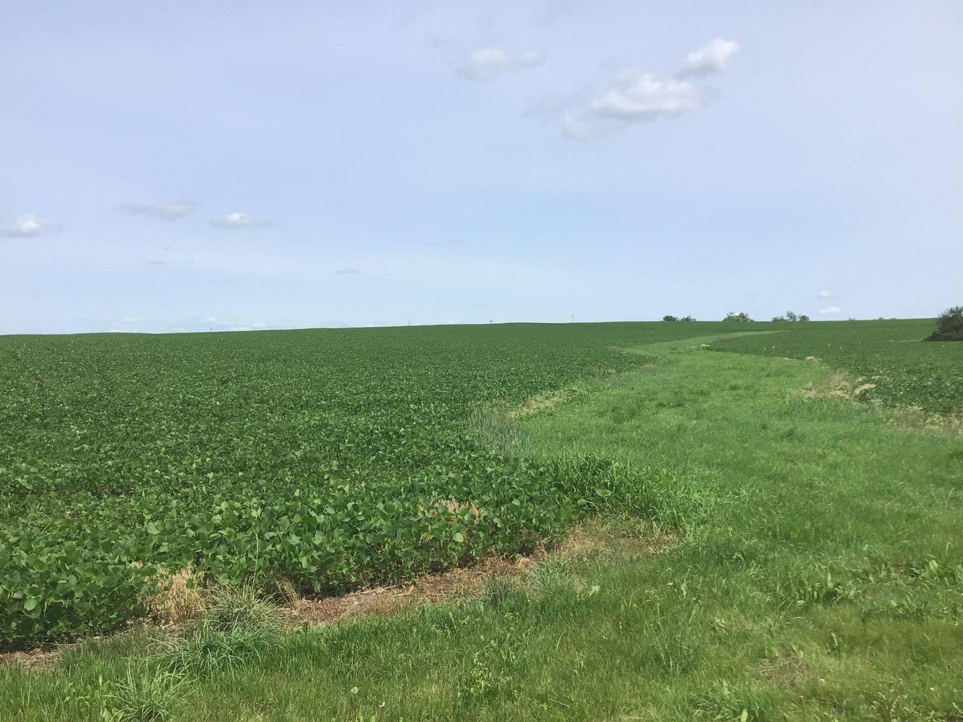 Clinton County 91 Acres M/L - Image 6 of 9