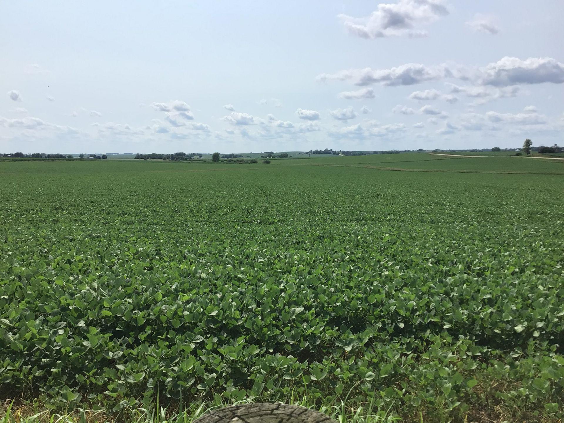 Clinton County 91 Acres M/L - Image 4 of 9