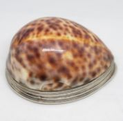 "3.5"" silver and cowrie shell snuff mull maker F B"
