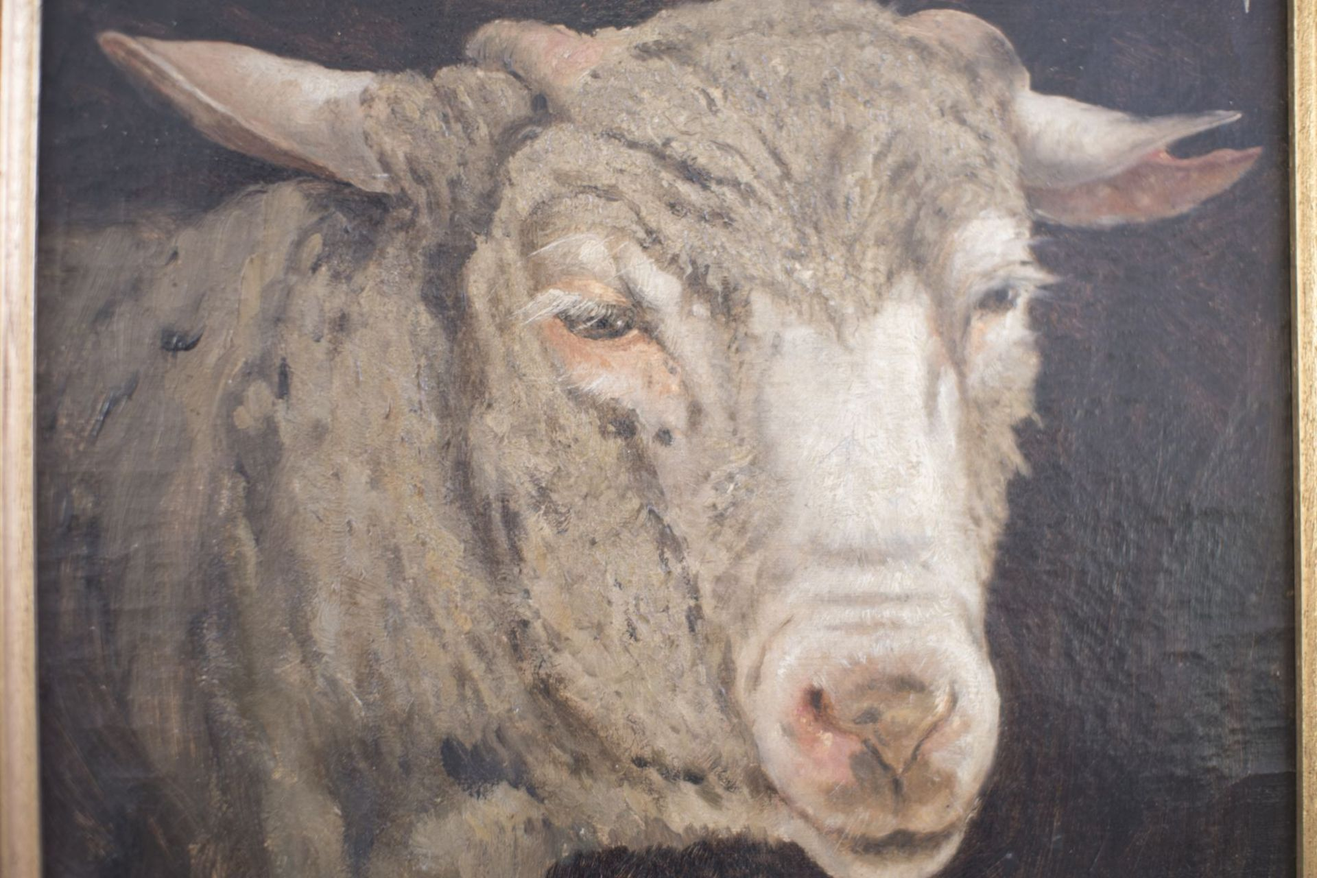 """Painter end of the 19th century """"Sheep's head"""" - Image 2 of 4"""