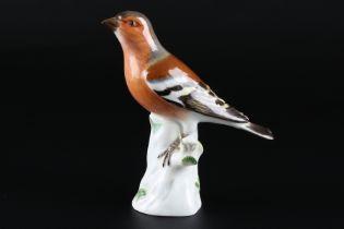 Meissen Buchfink, porcelain bird chaffinch,