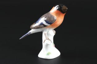 Meissen Blutfink / Gimpel, porcelain bird bullfinch,