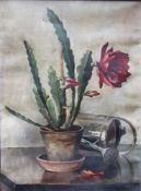 Unknown Artist artist 1920 , Cactus still life , oil on canvas, signed bottom left, framed. 62x45 cm