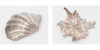 COPPIA DI CONCHIGLIE, ciascuna placcata in argento. Rispettivamente di cm 9x13,5x10,5 e Cm 5,