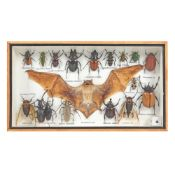 17 various insects and a bat in a box